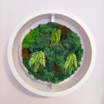 Скандинавски мъх с папратова модификация в кръгла рамка- жив декор за стена
